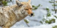 Exposing for Wildlife in Yellowstone National Park